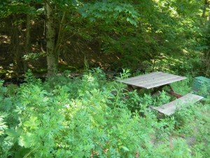 Creek w/ picnic table