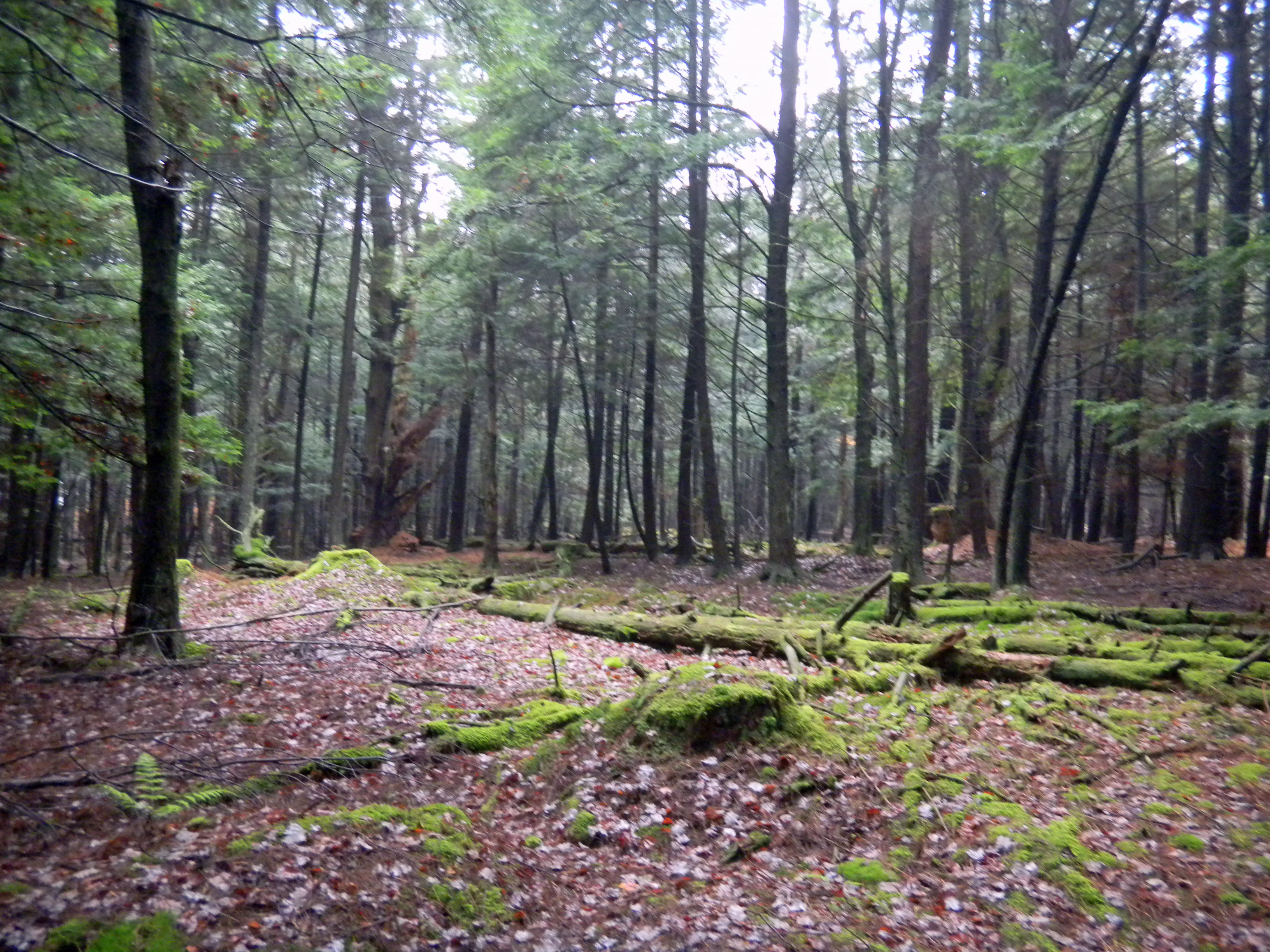 thompson land for sale upstate ny