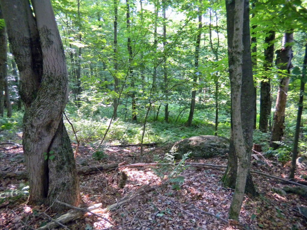 2 Prime Acres Surveyed & Perced – Woodbourne NY – Only $11,900