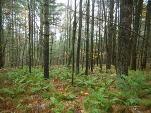Secluded, wooded lot