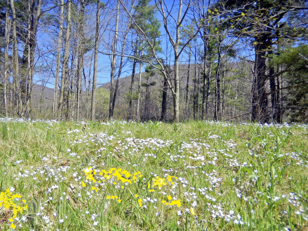Sneak Preview! Unique 15.7 Acre Parcel Shandaken NY – Buildable – Mt. views – Walk to Esopus Creek – Only $39,900