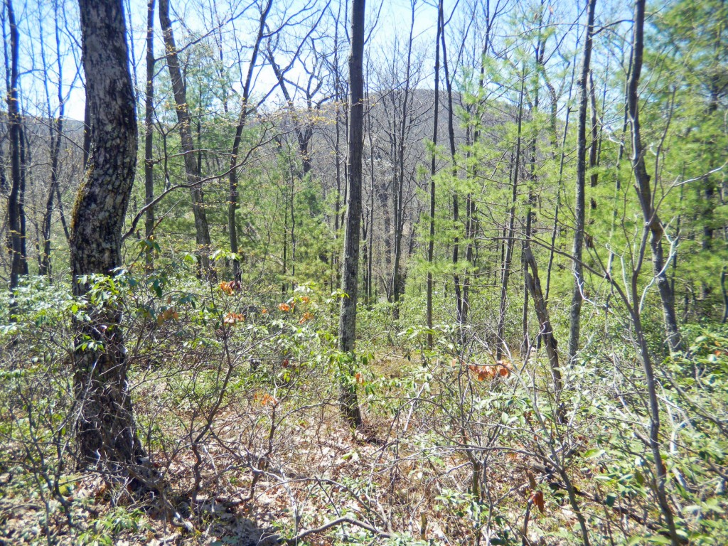 New Property Listing!! 2.2 Acres in Kerhonkson. Walk to Catskill Park! Mt. views! Only $14.9k