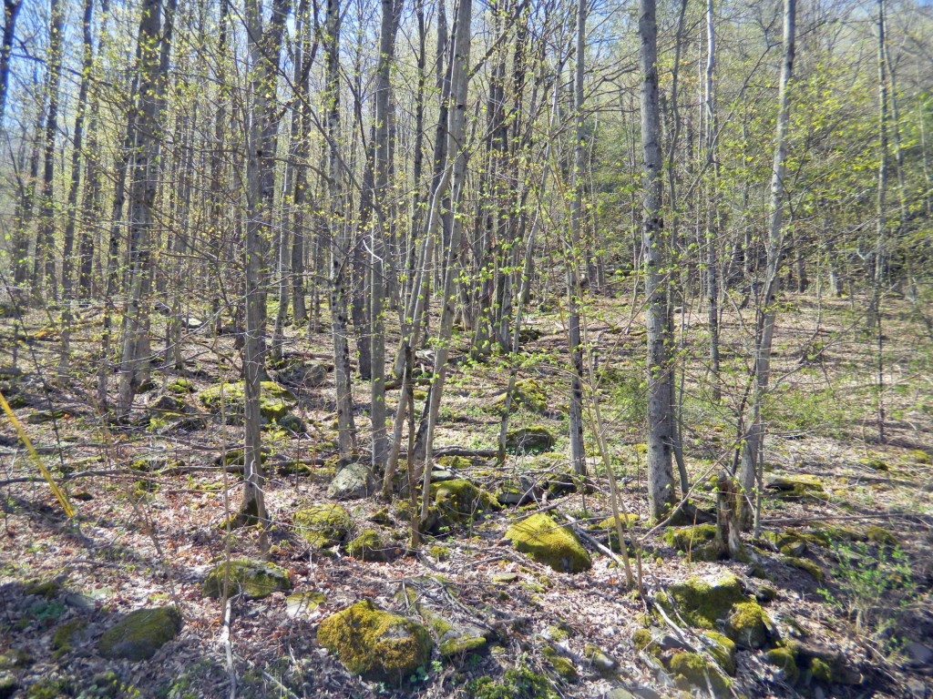 For Sale - .7 Acres Shandaken NY. Backs up...