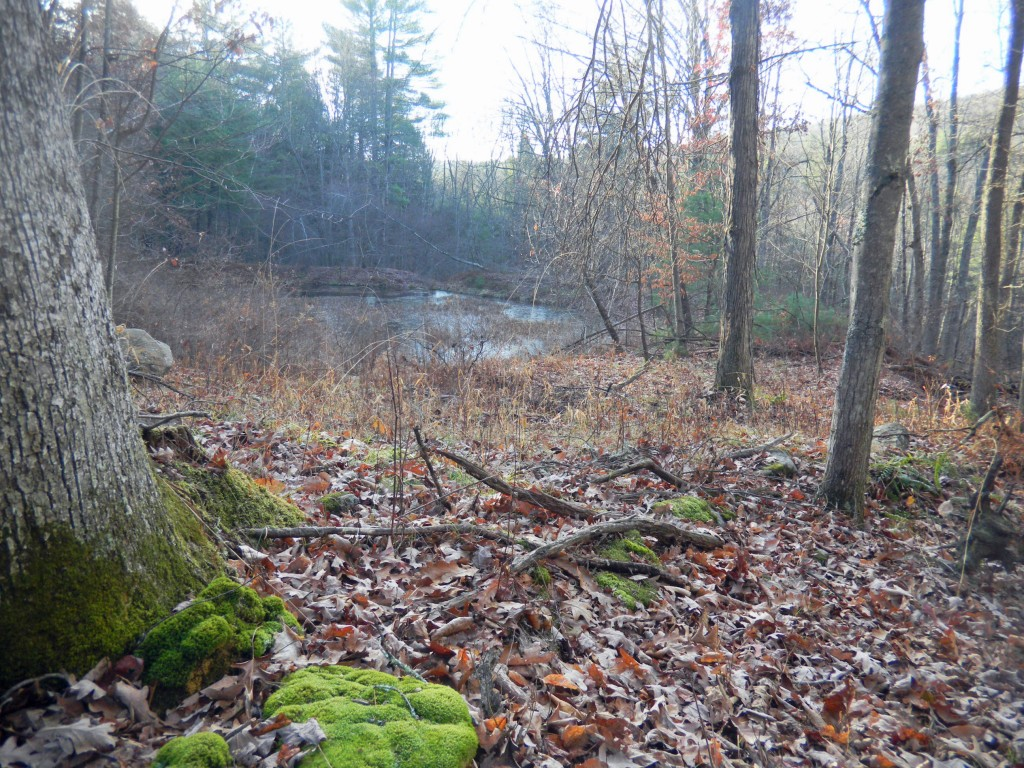 Sprawling 22 Acre Parcel Cochecton NY - Mt Views - Pond - Walk to Delaware - Only $49,900