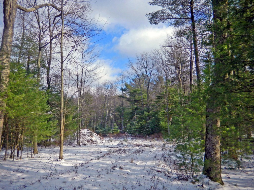 Forestburgh 4.6 Acre Building Lot – Site Cleared, Driveway In, Perc'd – Ready for your building Plans!! Only $49,900