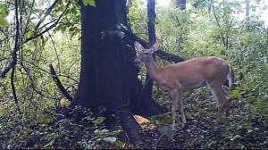 This Deer Thought No One Was Watching It Fart