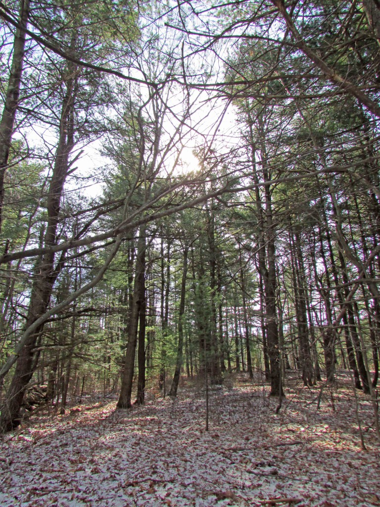 2.4 Acre Secluded Country Lot - Mountain...