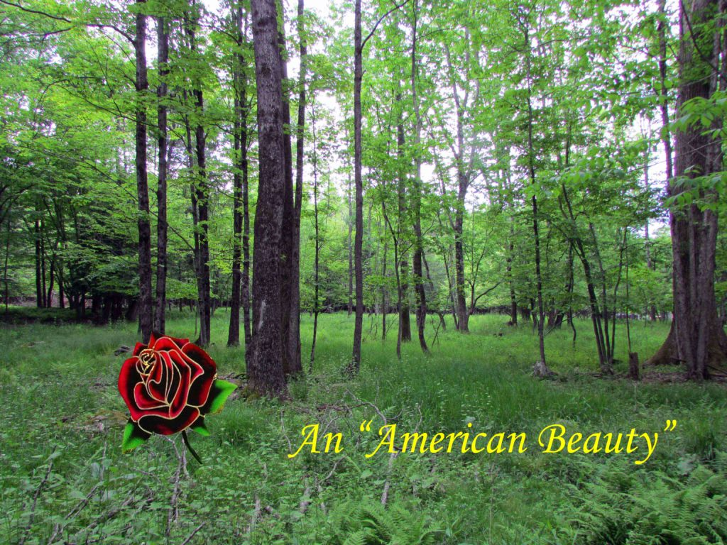 "An ""American Beauty"" – 4.6 Acre Country Building Lot, Bethel NY, Quaint Stream – Only $19,900!!"