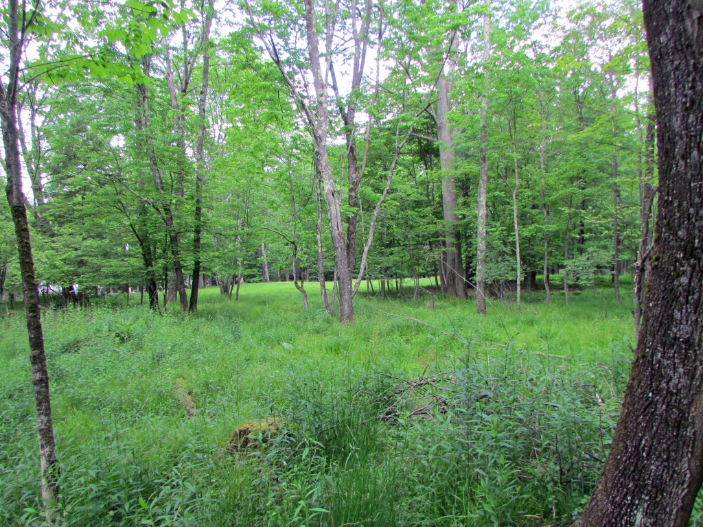 4.6 Acre Great Building Lot on Quiet Country...