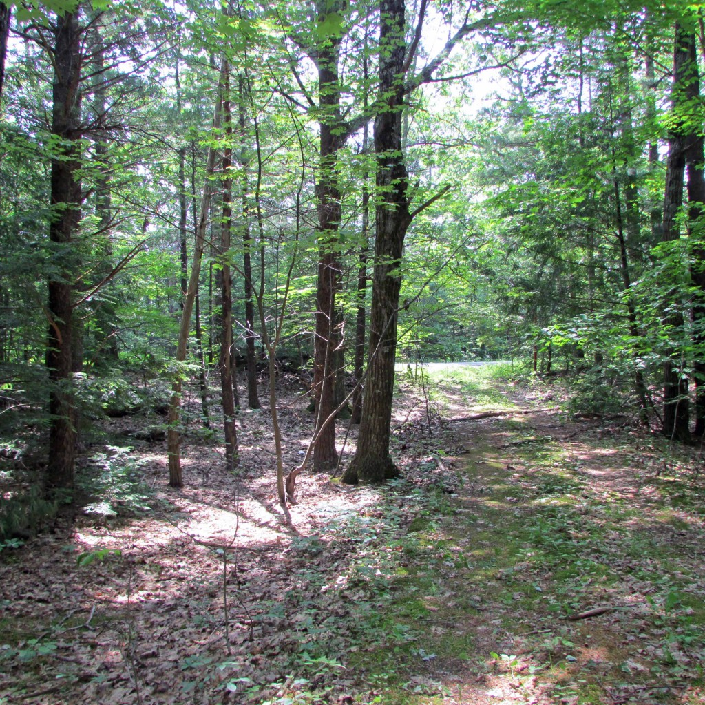 For Sale 2.26 Acre Secluded Parcel- Saugerties., NY - Voted 'Hudsons Valley's Best Town to Live In' Only $24,900!!