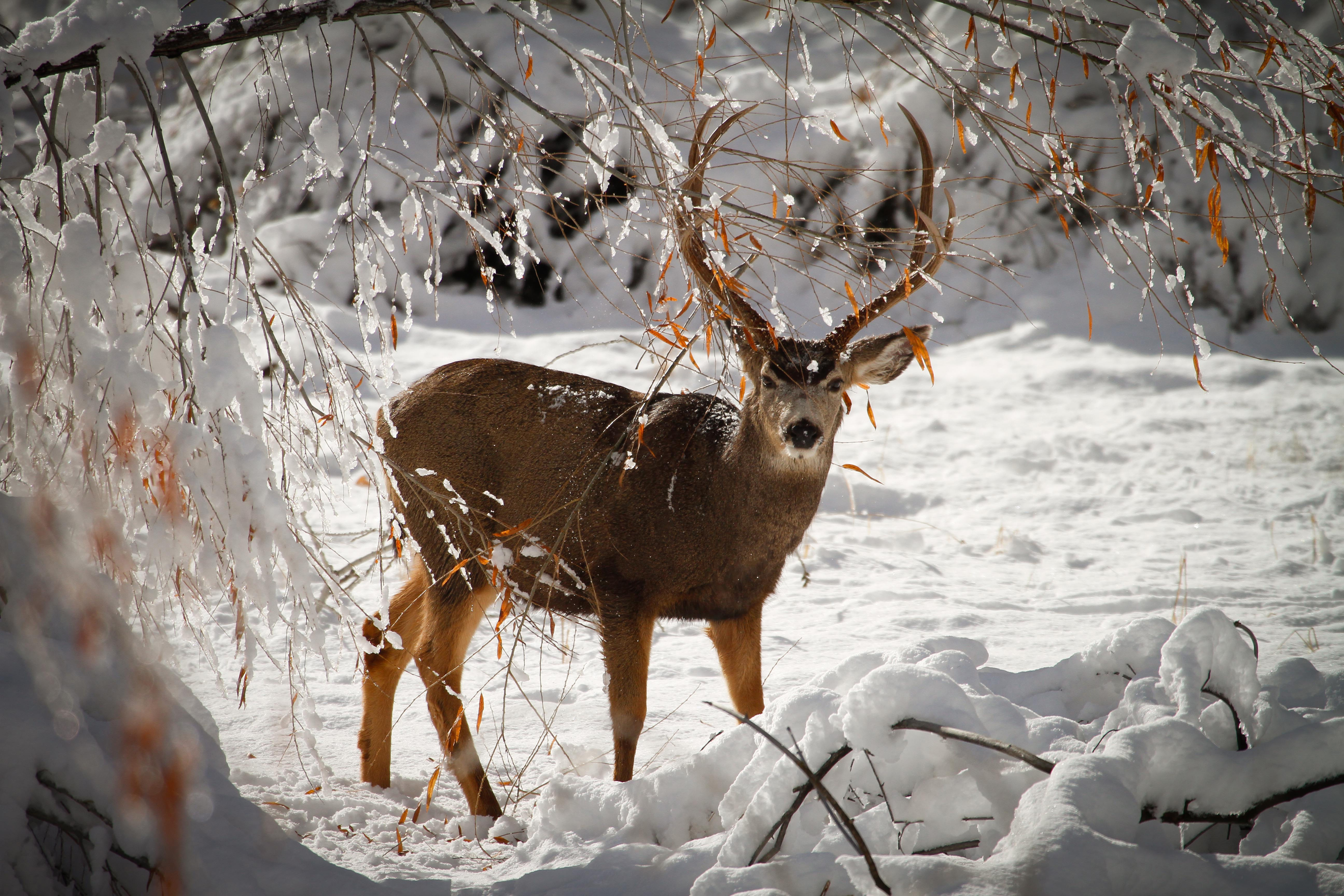division and analysis deer hunting