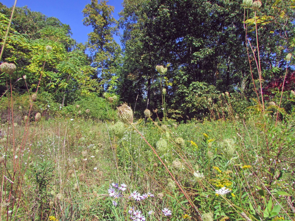 5+ Acre Refuge in the Woods – Catskill/Athens. Part Woods/Part Clearing. Many uses. Only $17,900!