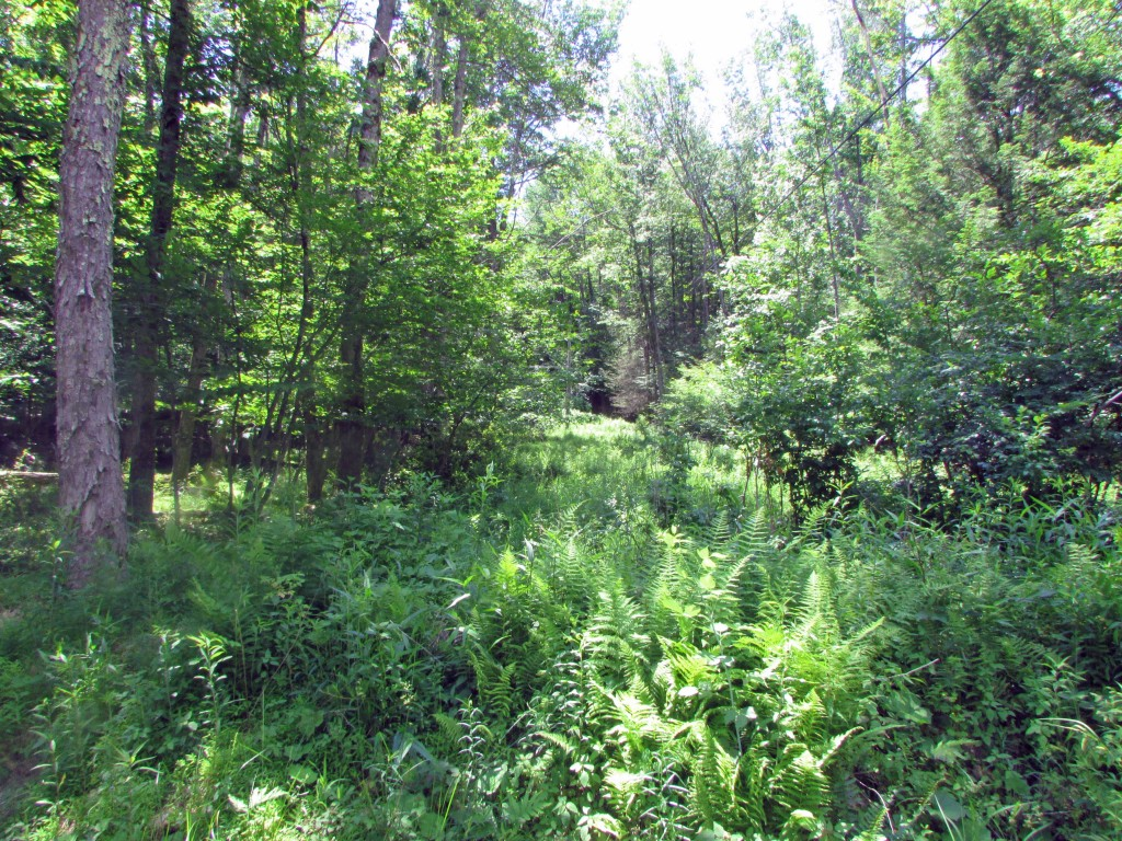 For Sale – 3 Acres of Rustic Solitude – Ellenville NY – Bordering 50 acre preserve. Reduced $12,900
