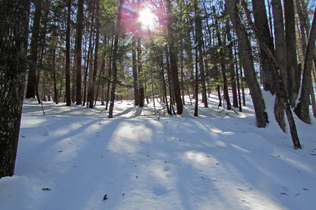 For Sale -15.3 Acres of Scenic Wilderness – Blenheim, NY – Only 3 hrs to NYC! 1 hr to Albany! Walk to State Land!!