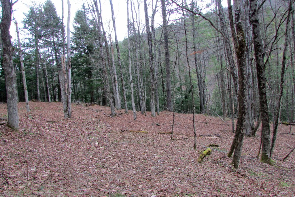 For Sale -15.3 Acres of Scenic Wilderness...