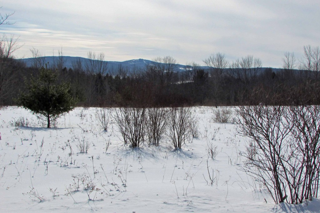 FOR SALE  9.6 CHOICE ACRES  Jefferson, NY  in the heart of  Schoharie County -  Partially Cleared, Partially Wooded. Well Drilled!! Spectacular Mt Views. 3 hrs to NYC. Only $22,900!