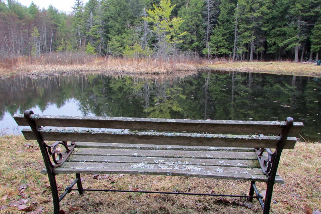 5 Secluded Acres on Golden Pond in Park-Like...