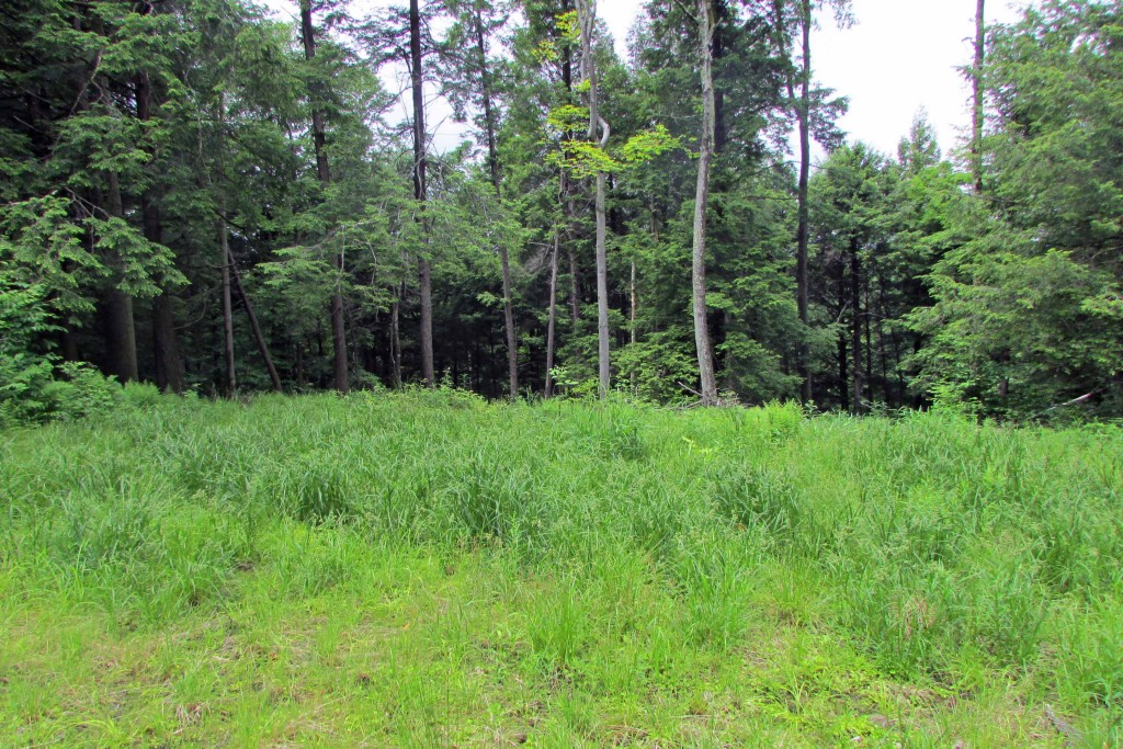 For Sale 1.67 Private Acres, Livingston Manor NY. Great location for country house, cabin or weekend RV. Electric on-site. 2 hrs NYC!!
