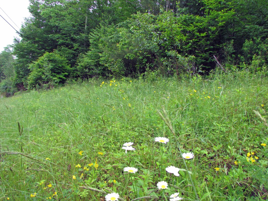 For Sale .71 Acre Country Lot, Liberty NY – Close to all! Enjoy peaceful country living only 2 hrs from NYC!!