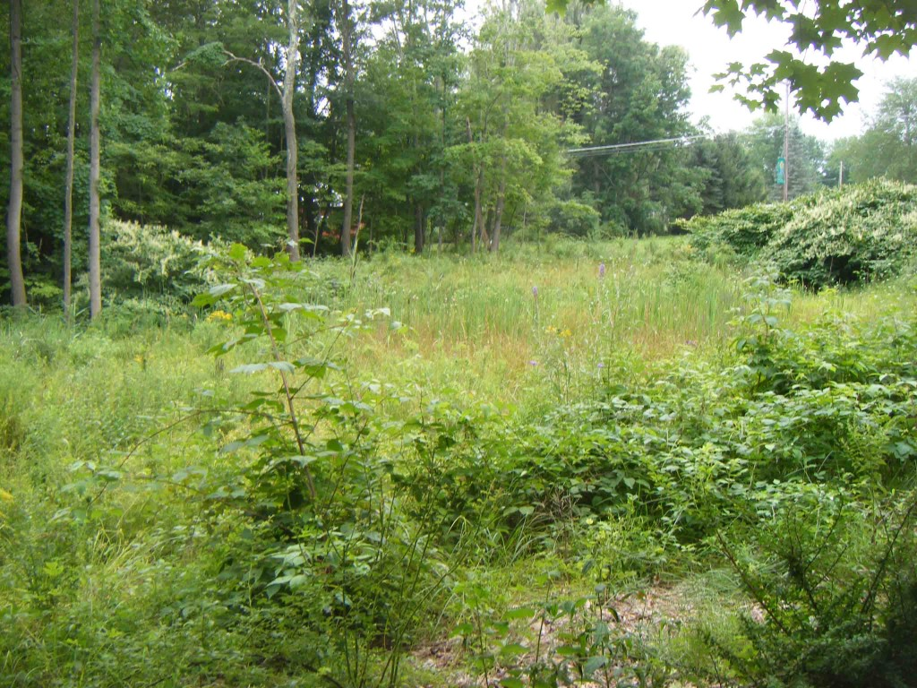 For Sale  Pristine .5 Acre  Pine Bush  Building Lot. Cascading creek! Camping/RVs OK! Mins to state land. 2hrs/NYC – Only $7,900!
