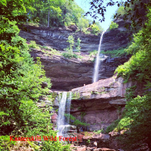 kaaterskill wild forest fall1