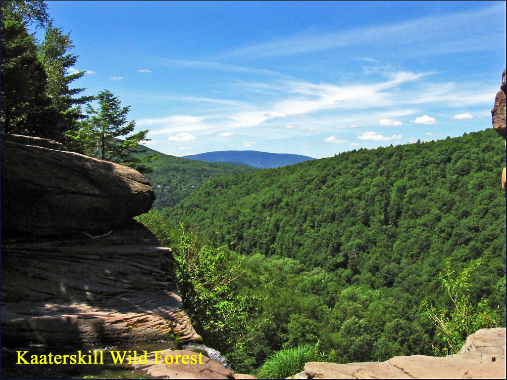 kaaterskill wild forest view1