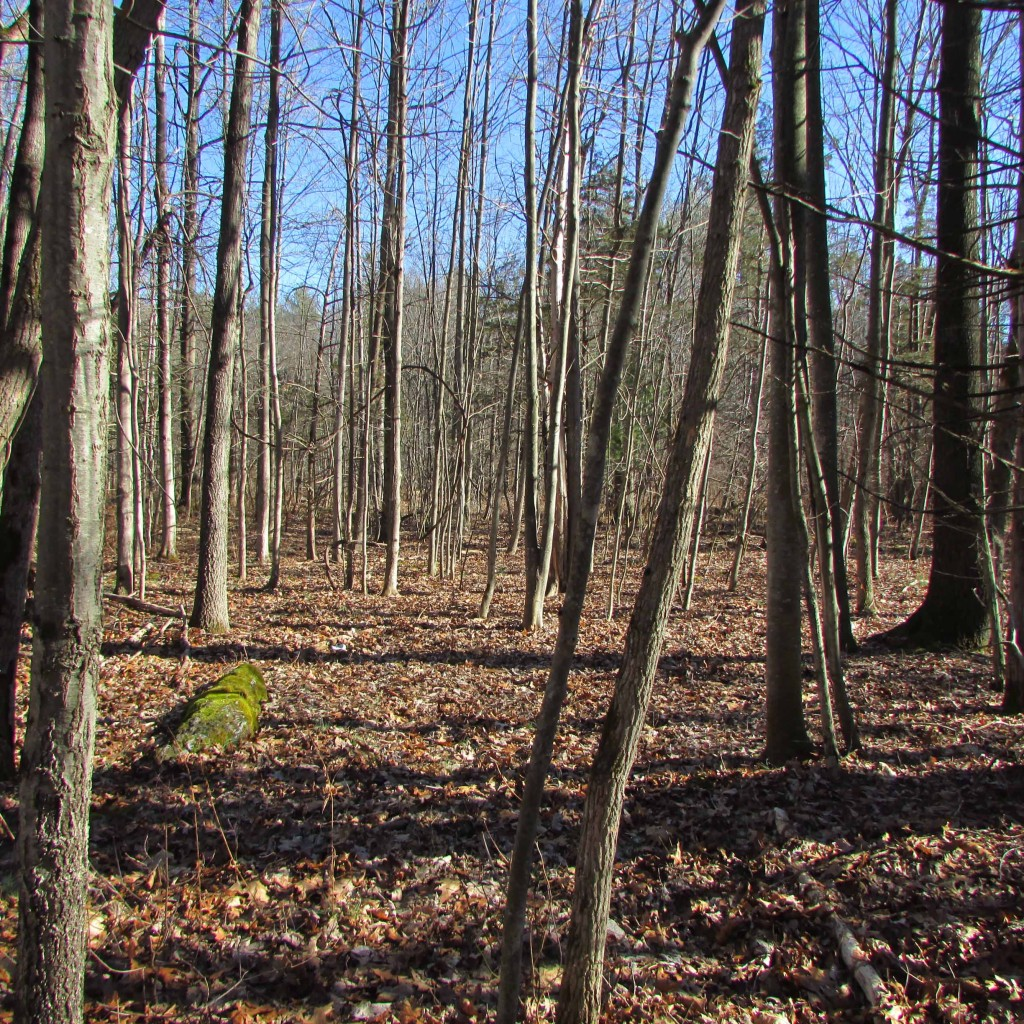 FOR SALE   2.38 Acres on Private Country Rd.  Kerhonkson NY, Ulster County.  Secluded yet  conveniently located off Rt 209. Walk to the Old  Minnewaska Trail. Only $14,900!