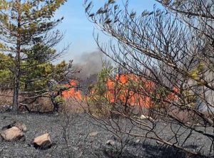 Ulster County Wildfire Scorchs over 300 acres  in Sam's Point Preserve