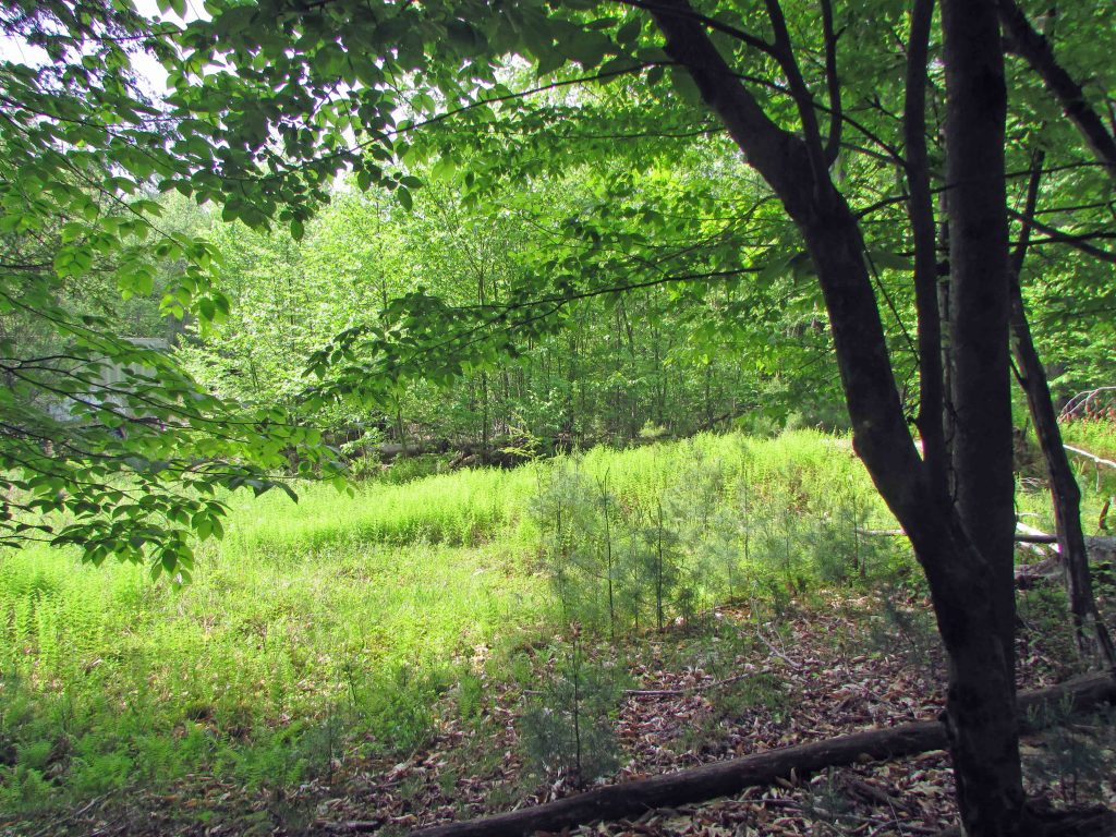 FOR SALE  9.9 Lush Acres  on winding country road  Mountain Dale /  Fallsburg, NY. Electric – Babbling Brook. Driveway In. FREE Storage Trailer!  1 hr , 45 min/NYC! Only $23,900!!