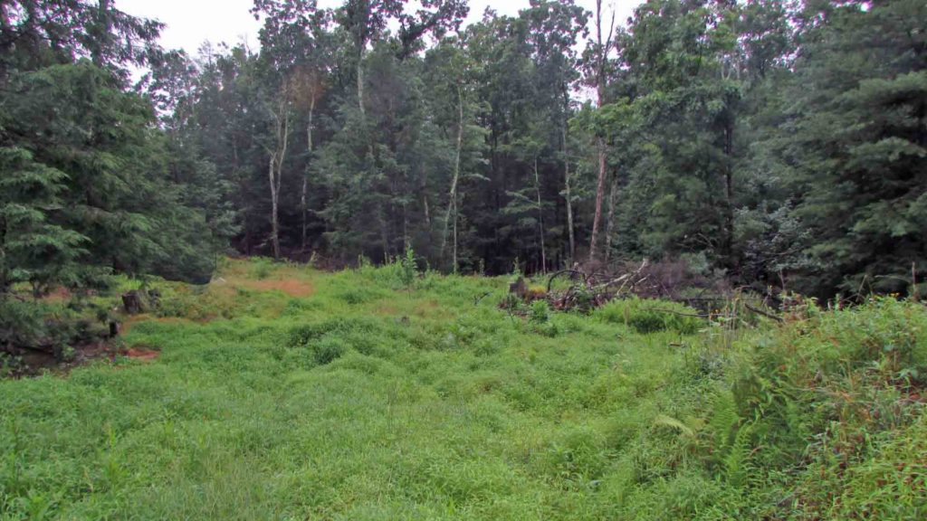 For Sale - 5 Pristine Acres Kerhonkson NY...