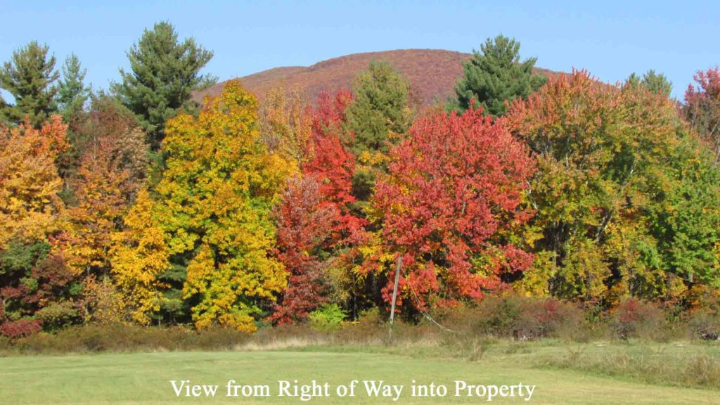 For Sale 11.8 Private, Forested Acres, Olive NY. Deeded Access Off the Beaten Path! Mins/Sundown Wild Forest & Ashokan Reservoir. 2 hrs/NYC. Only $23,900!