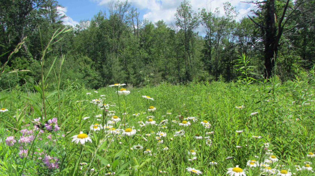 """Whispering Meadows"" -2.3 Acre Corner Lot, Wawarsing/Ellenville, NY – Pond – Meadows – Driveway – Mins/State land – 2 hrs/NYC. Only $16,900!"
