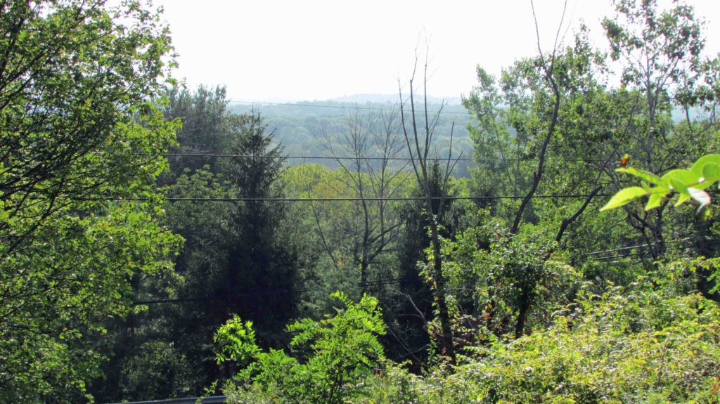 "Welcome to ""The OUTBACK"" – One (1) Private, Secluded  Natural Acre  Athens/Catskill, NY – RV's OK – Mins/NYS Thruway – 2.5 hrs/NYC – Distant Mt. views – Only $8,900!"