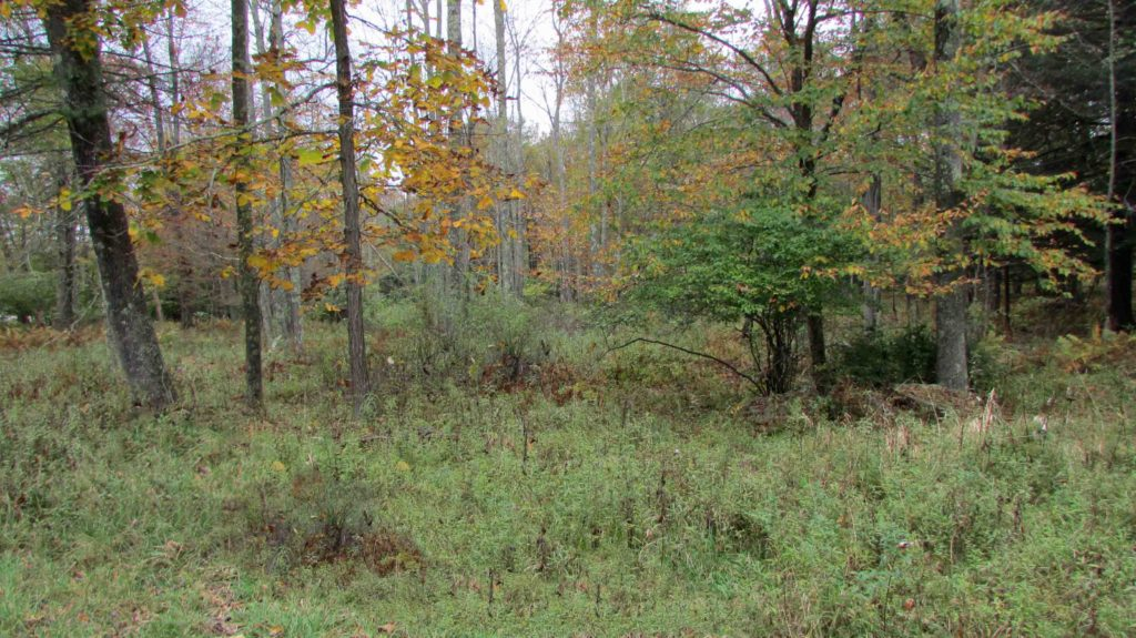 """Cochecton Comfort"" – 4.13 Level, Wooded, Country Acres – Mins/Delaware River – 2+ hrs/NYC – Distant Mt. Views – RVs OK!! Only $15,900"