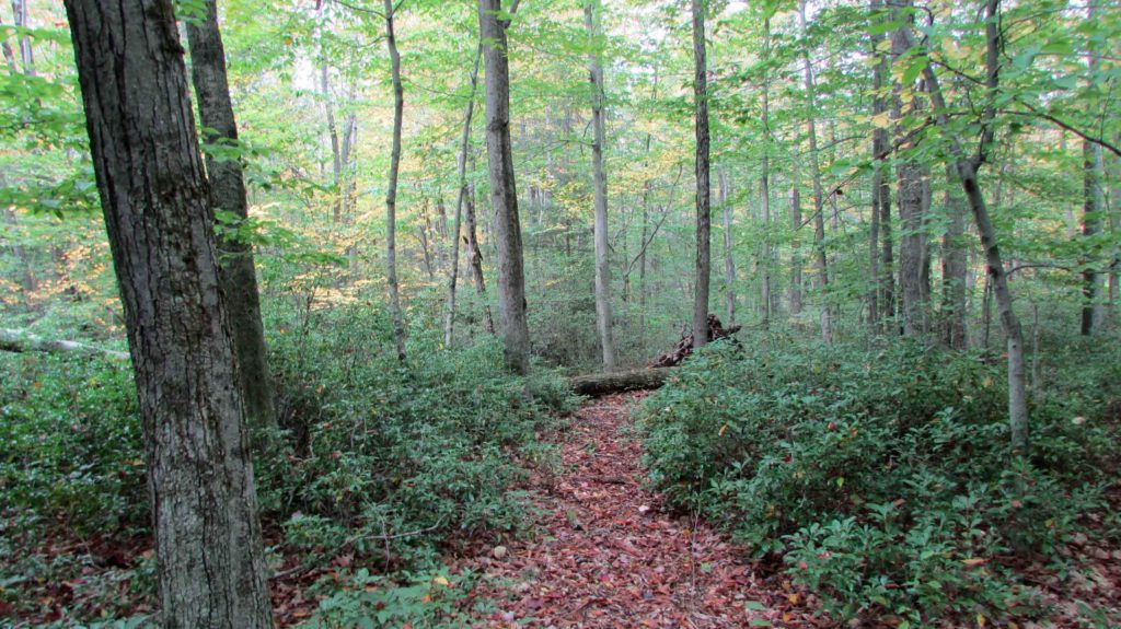 "FOR SALE   3.9 ACRES of   ""HAPPY TRAILS""  Ellenville/Wawarsing –  Level woods – Abundance of wildlife – Walk to DEC land -Only $14,900!"