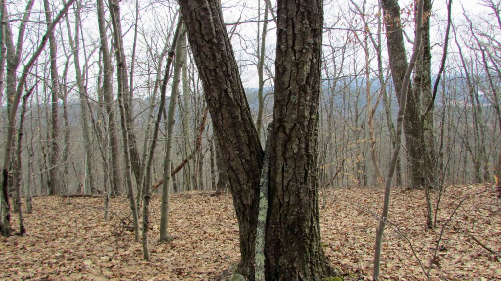 """The Edge"" – 7 Secluded Acres on the Valley's Edge, N. Blenheim, NY – Sweeping Mt Views – Ideal for RV-Camping-Hunting-Hiking – Only $13,900!"