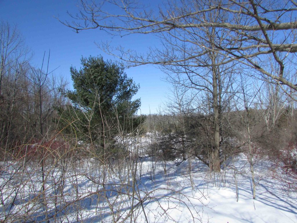 Sneak Peak! 10+/- Amazing Acres - Sharon...