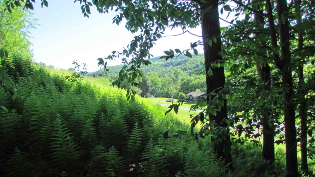 NO MONEY DOWN!!! 2.6 SPRAWLING Acres  Callicoon, NY – MT view – Maintained road – Electric – 2 hrs/NYC – Mins/Delaware River –   Reduced $11,900!!