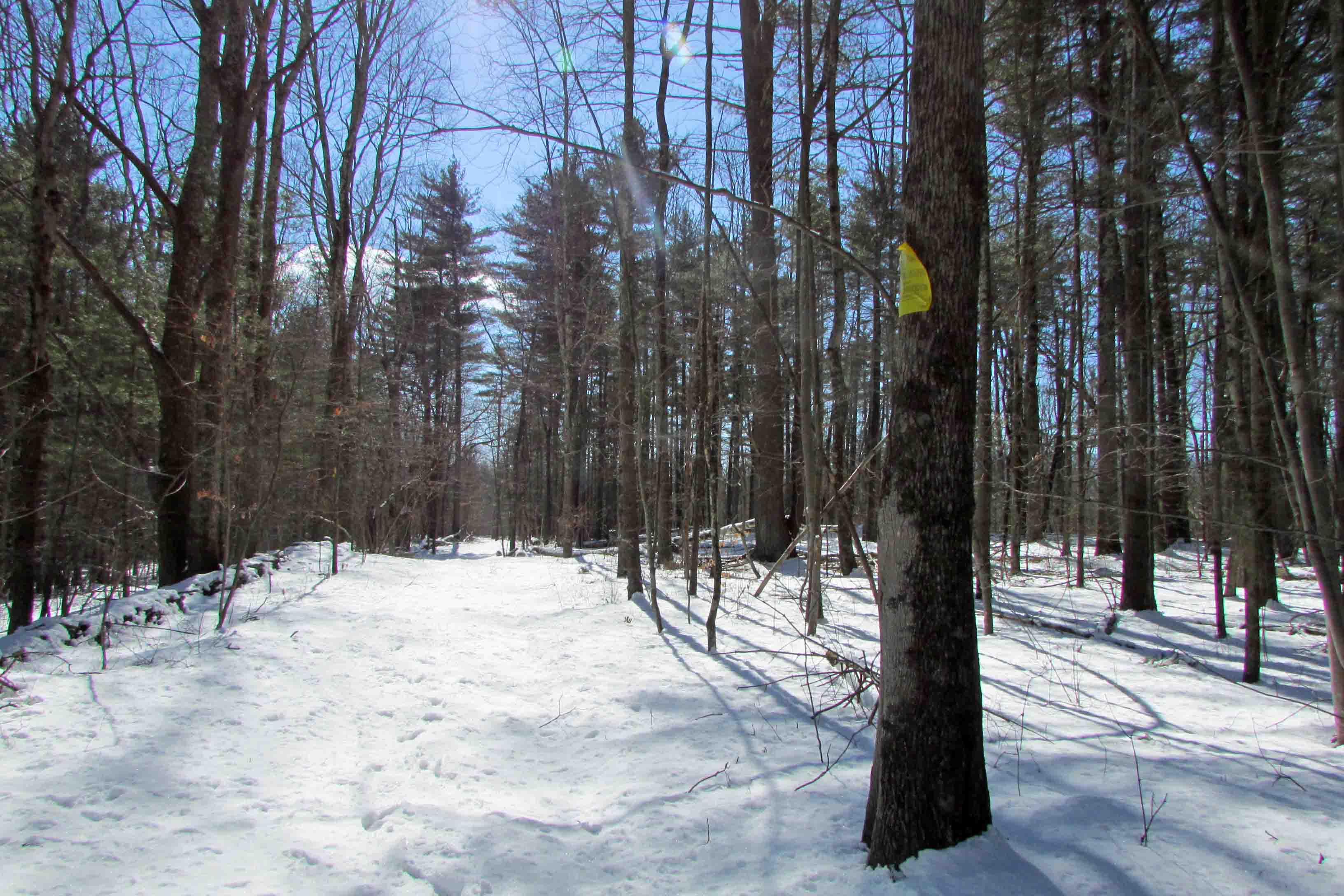 """THE ROAD TO CAIRO"" 2.9 Secluded Acres – Deeded Private Rd – Level & Wooded – Country Stone Walls –  Mins to Windham Mt – 2.5 hrs/NYC – Only $14,900!"