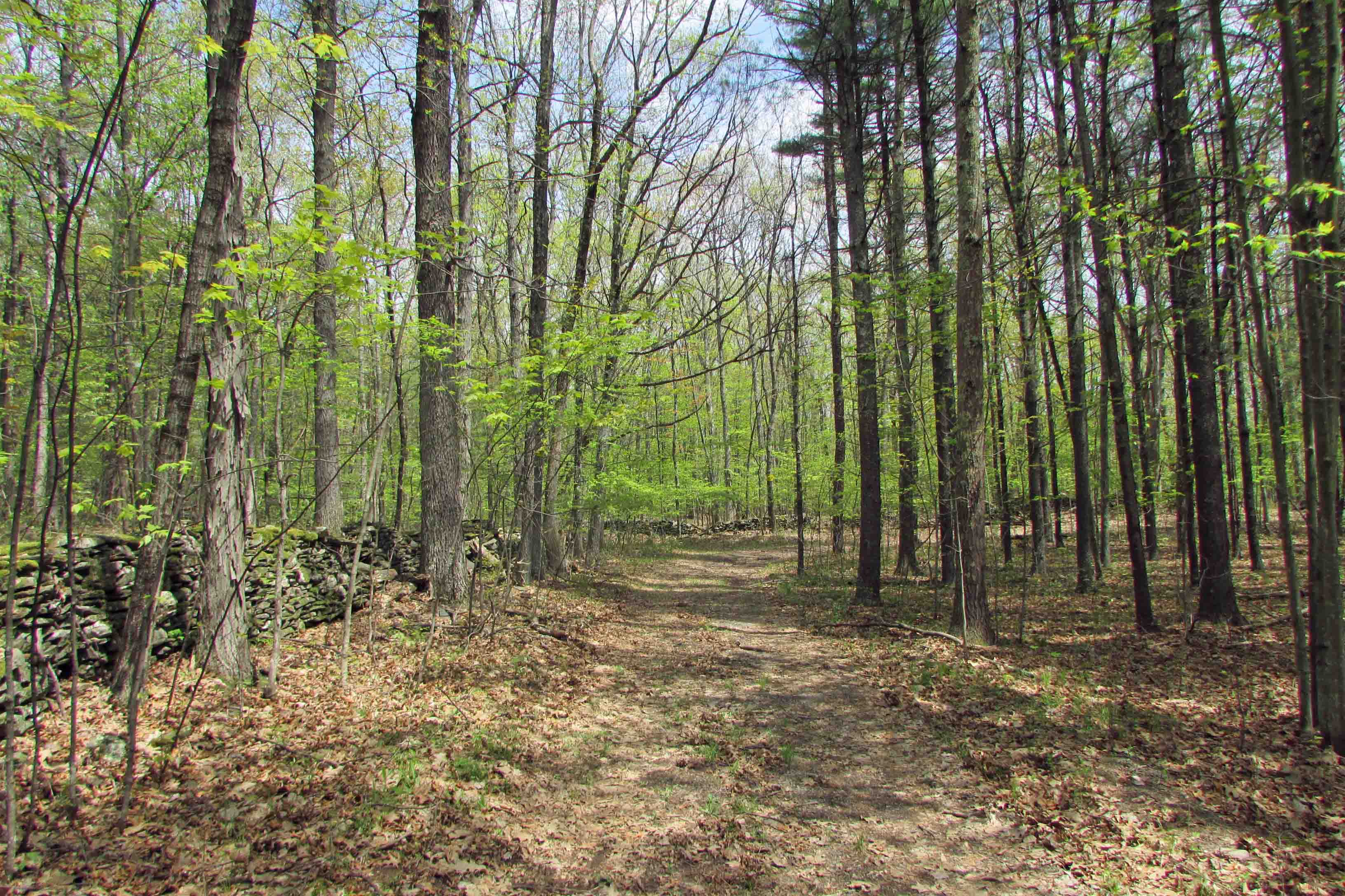 """THE ROAD TO CAIRO"" 2.9 Secluded Acres – Deeded Private Rd – Level & Wooded – Country Stone Walls –  Pond – Mins to Windham Mt – 2.5 hrs/NYC – Only $14,900!"