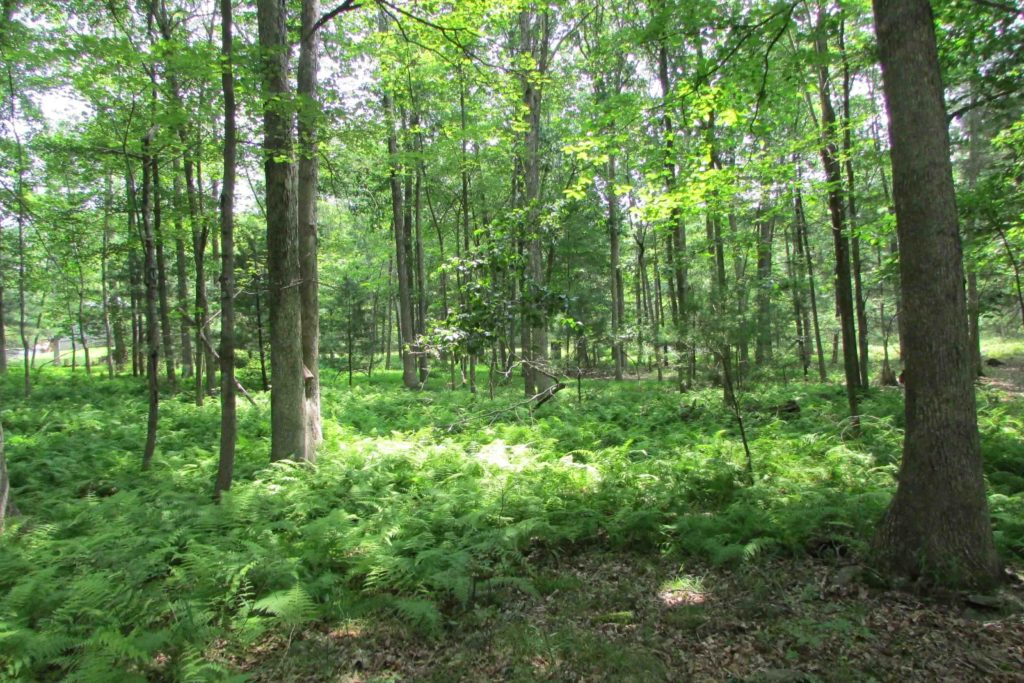 'AUTUMN WOODS' – 1 Cozy Acre Lumberland, NY – Level, Wooded, Electric – Mins to Delaware River – Only $999 down!