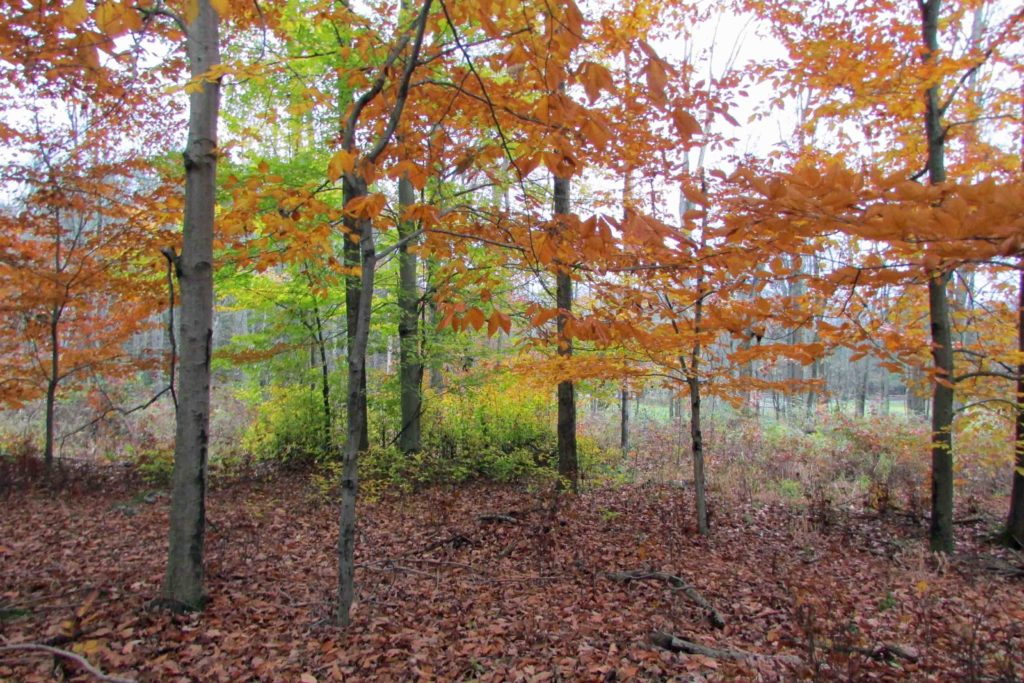"""NATURE'S CHOICE"" 2.46 Rustic Acres Callicoon – Mins/Delaware River – 2.5 hrs/NYC – Part clear/wooded – Views! Only $14,900!"