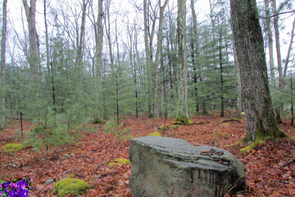 """The ONE"" – 1.33 Rustic Acres in Glen Spey – Level – Lightly Wooded – Newly Paved Rd – Mins to Delaware – 2 hrs/NYC! – Only $10,900"
