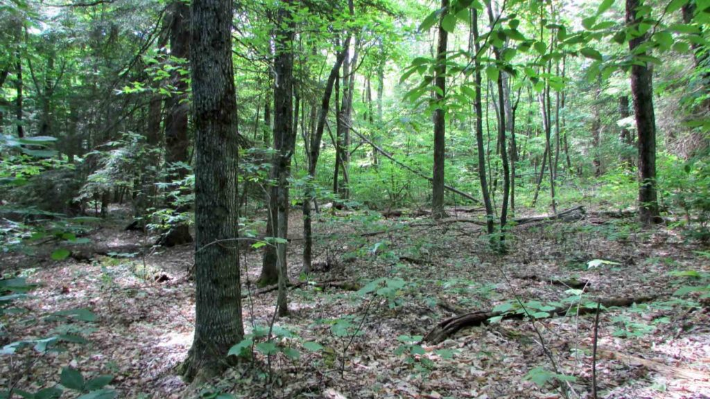 """FULTON FLATS"" FOR SALE   7.3 Country Acres Fulton NY – Private Rd. – No town zoning – RVs OK!! -Walk to State Forests – 3 hr/NYC – Only $20,900!"