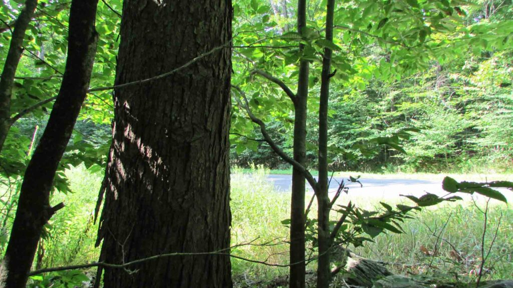 Starlight Pines – 5+ Country Acres w/Rights to Swinging Bridge Lake. 90 miles/NYC. Great loc. Only $27,900!