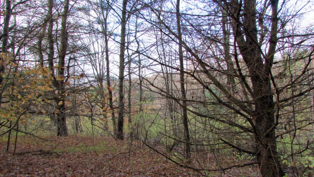 """Rosey's Retreat"" 2.5 Bright Country Acres, Roseboom, NY, Otsego County – Level – Stream – Electric – No town zoning – 3+ hrs/NYC – Only $19,500!"