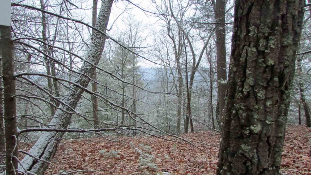 """RAMBLING Rd"" – 1.23 Rambling Acres Mamakating NY – Mt views – Great location – Walk to Bashakill – 90 mins/NYC – Only $14,900!"