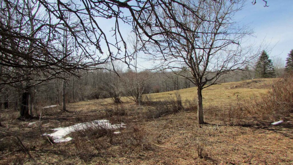 """CLASSIC ROCKland"" – 1.6 Fertile Acres Rockland NY Sullivan County – Level – Stream – Views – RVs OK – Min Rt 17 & Roscoe – Only $12,900!"