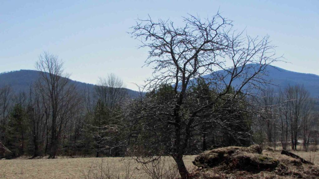 """HARVEST"" 5 Bountiful Acres, Jefferson NY, Sweet Mt. Views. 3 hrs/NYC. RVs OK. Only $19,900!"