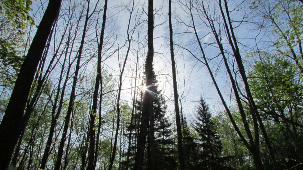 """""""BIG PINES"""" 5.43 Acre Corner Country Lot Summit NY – Pond view – Level – Small Brook – Electric – RVs OK -3 hrs/NYC – Only $23,900!"""